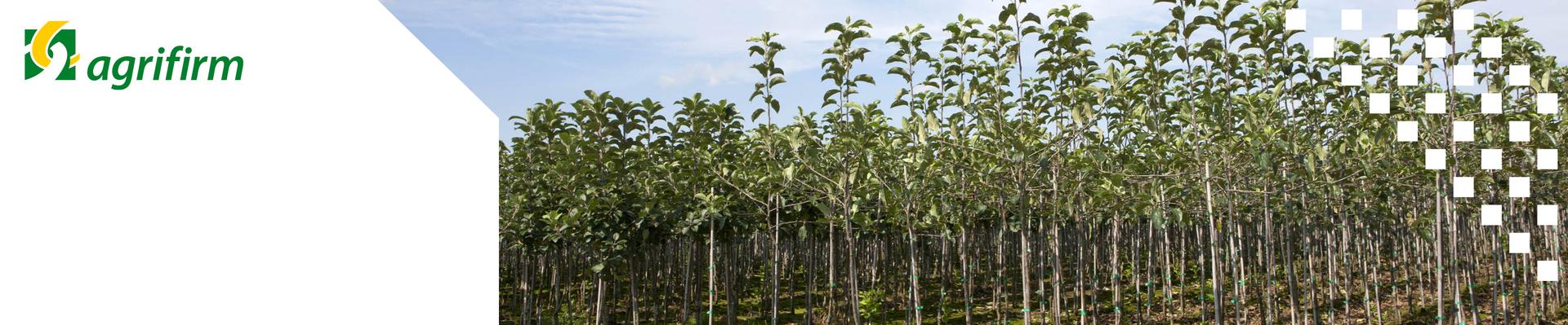 Kennisbijeenkomst Vruchtbomen