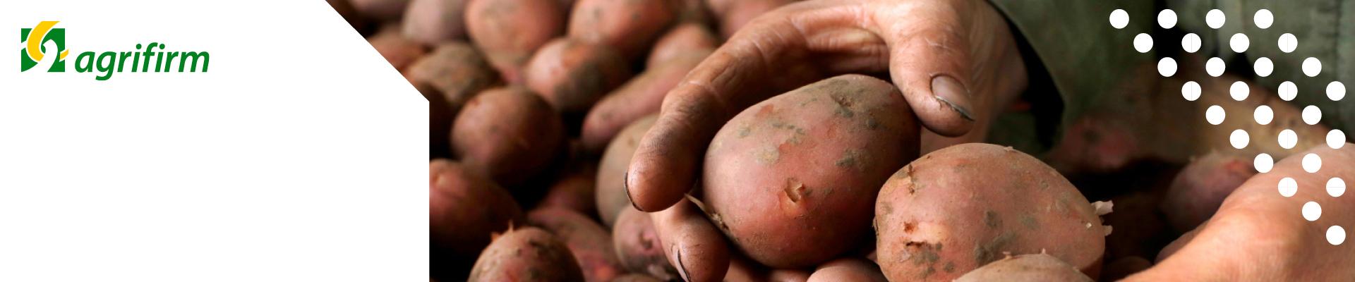 Kennisbijeenkomst aardapelbewaring regio Zuid