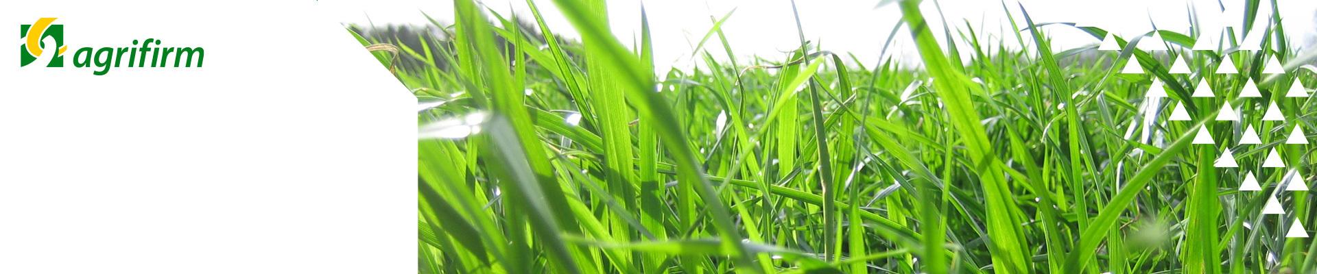 Online bijeenkomsten bemesting gras- en maisland