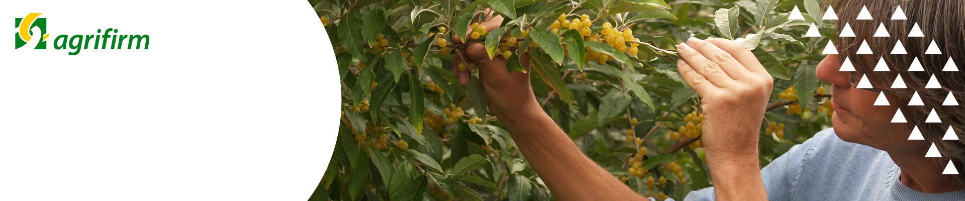 Group - Online bijeenkomst Agrarische Voedselbossen