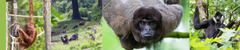EAZA ANIMAL WELFARE FORUM 2022